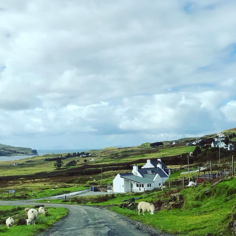 Photo of sheep grazing on the side of the road with houses and rolling hills in the background