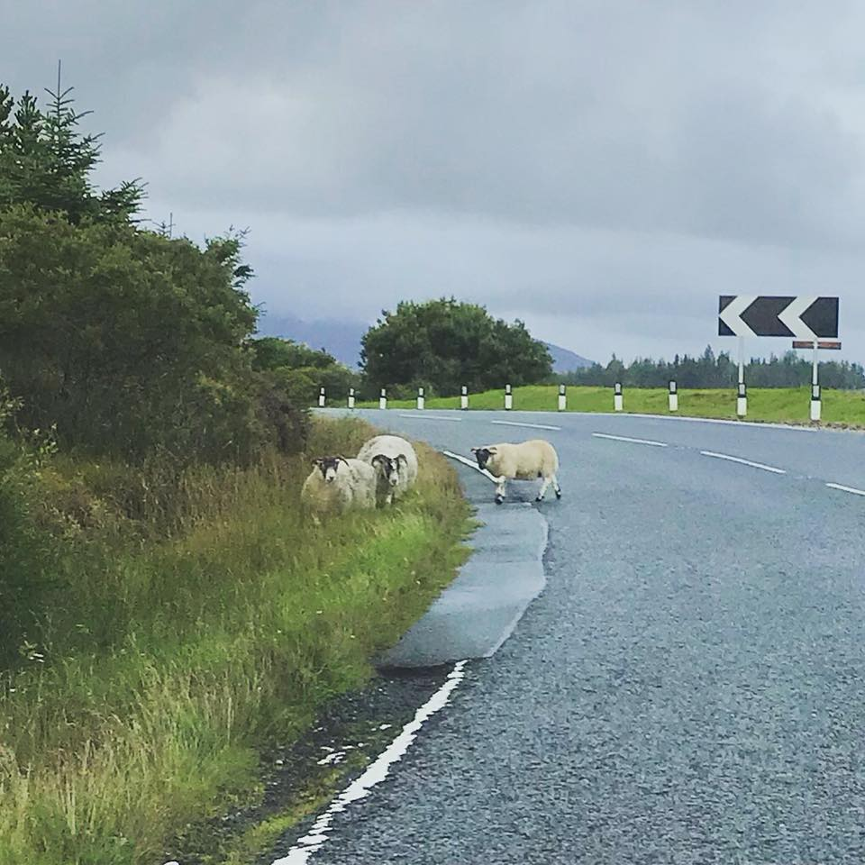 Photo of sheep crossing the road on a cloudy day