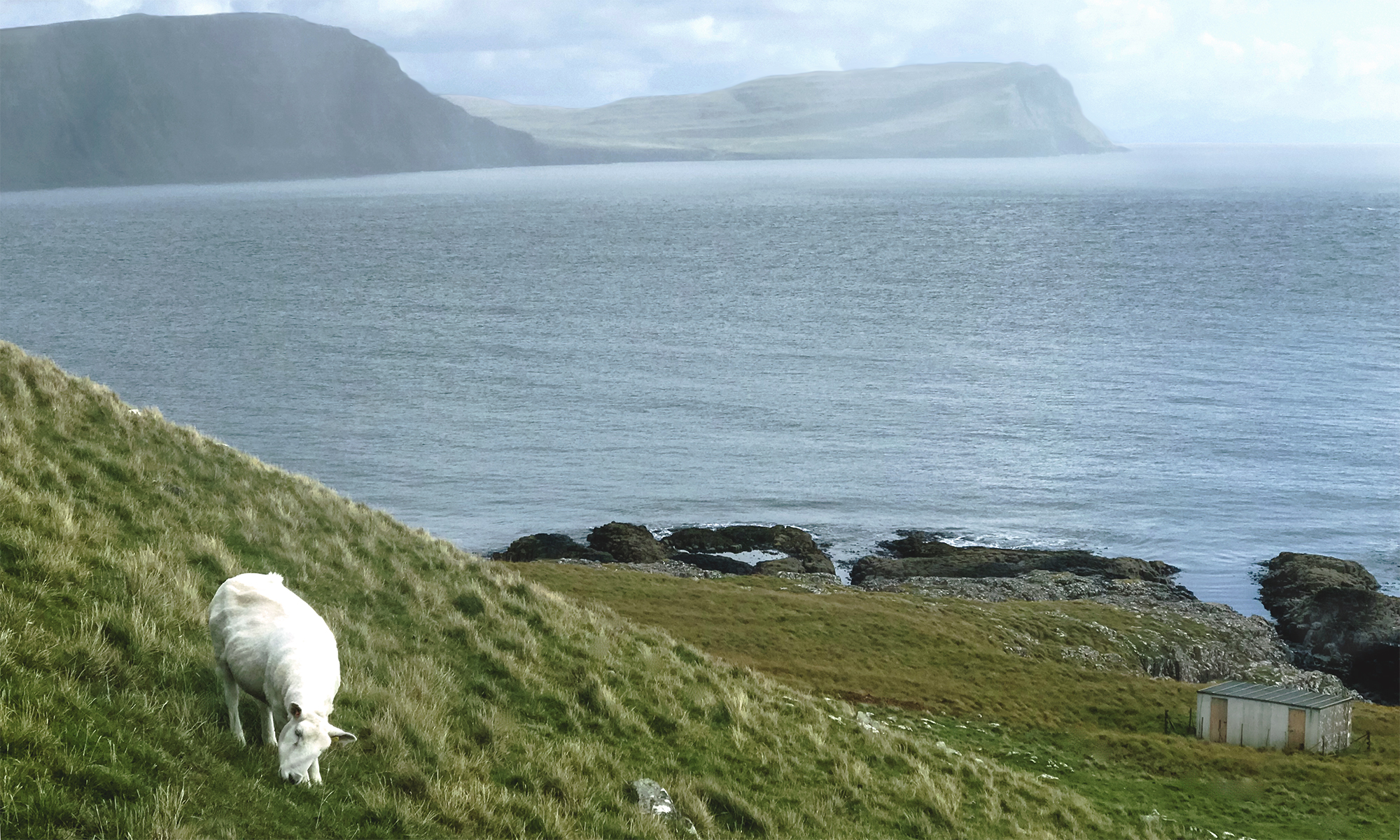 Photo of a sheep grazing on a hill next to the sea and cliffs